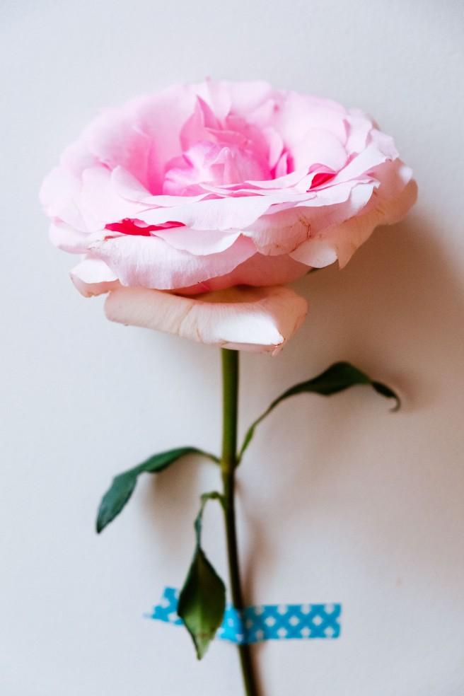 roos met maskingtape